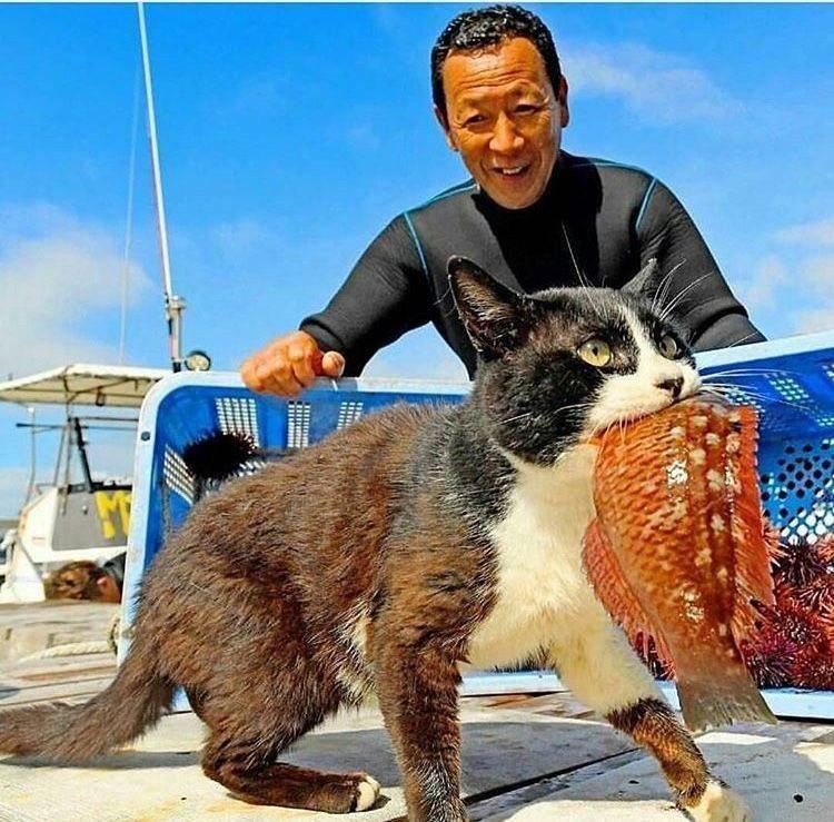 この写真が猫と人との写真の中で一番好き