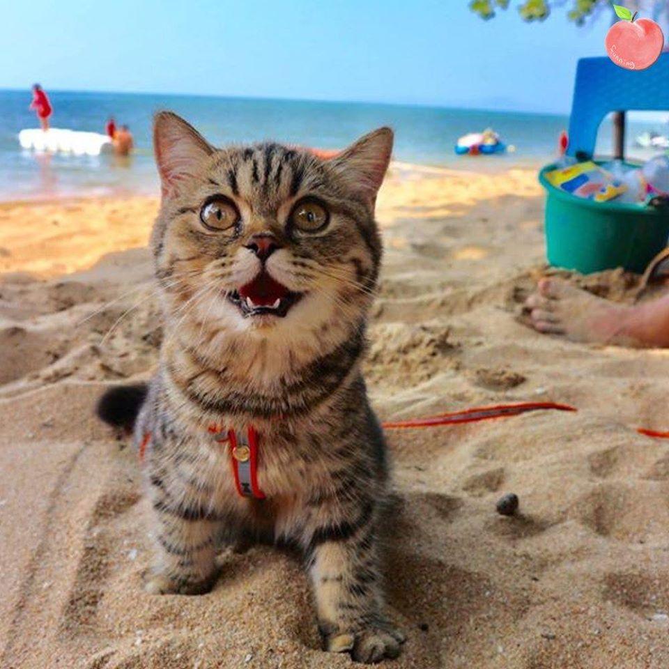 海に休みに行った猫.