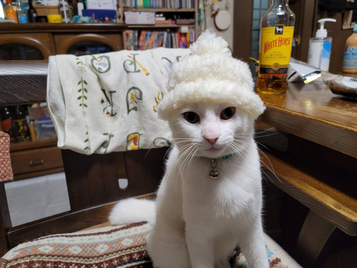 実家の母から「孫に帽子編んだけど小さすぎた」って送られてきた写真