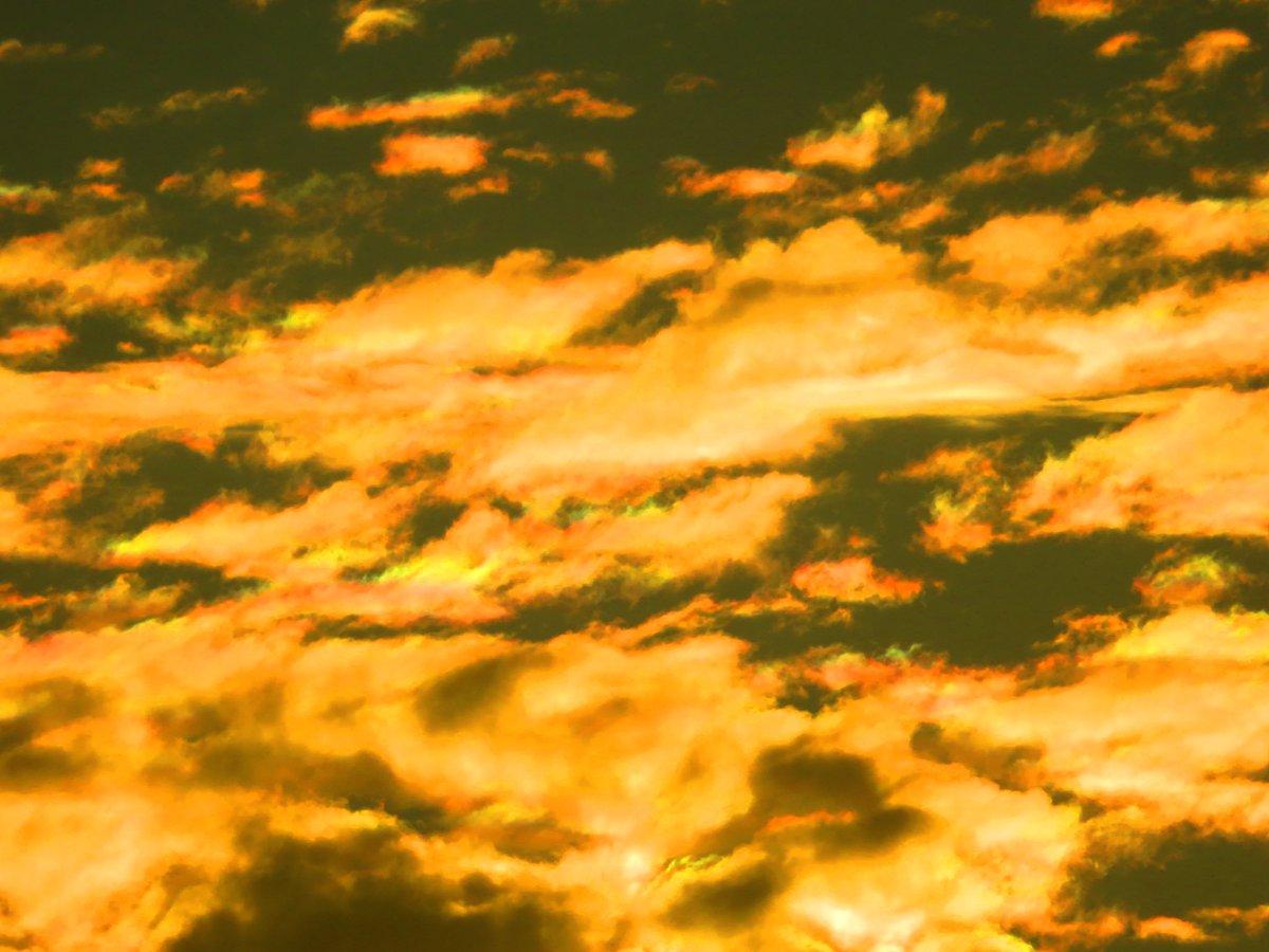 黄金空! 暖色系の彩雲もいます.