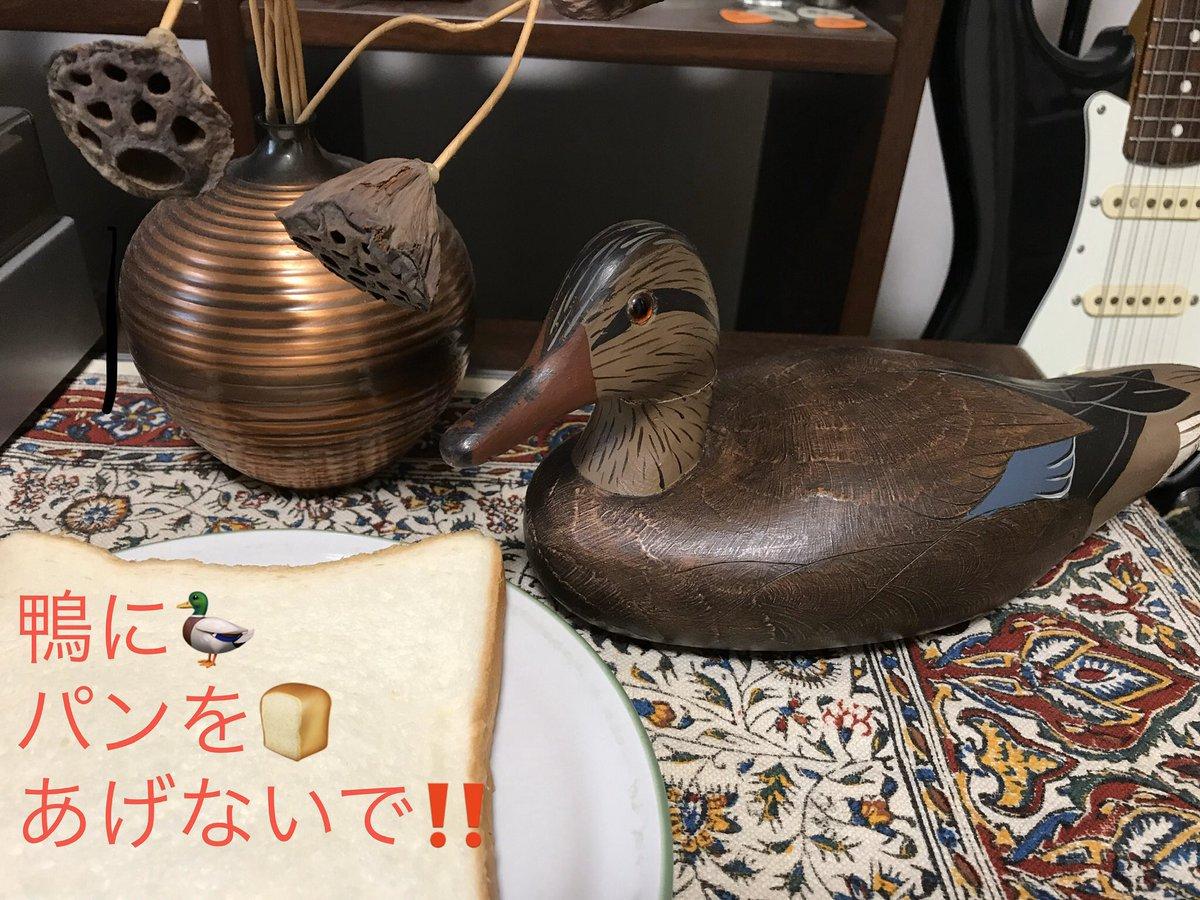 鳥達自身はそれを知らず喜んで食べてしまいます