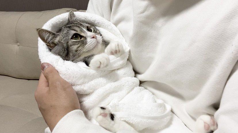 お包みされてごきげんな赤ちゃん猫です笑