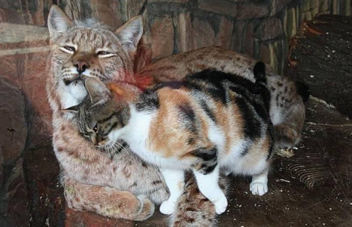 サンクトペテルブルクの動物園で、約12年一緒に飼われている