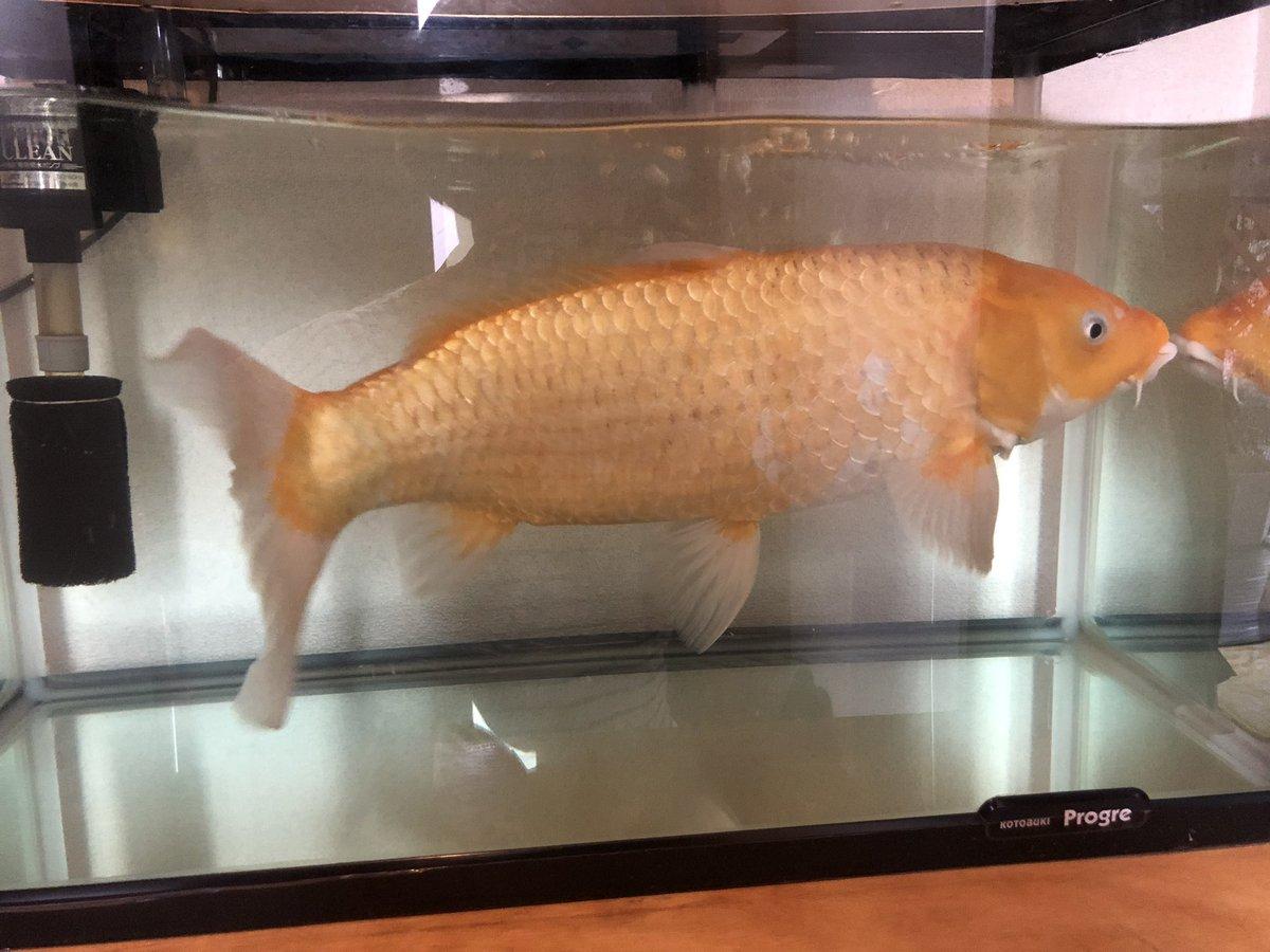 小4のとき祭りで金魚をすくっただけなのに。。。。