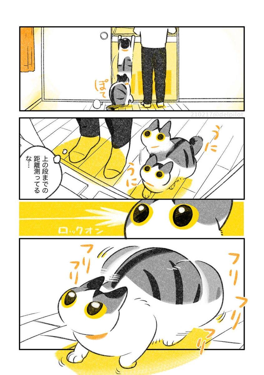 押入れ探検が好きな猫