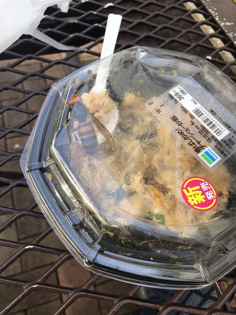 【悲報】大学の外でチャーハン食べてたら、バチくそデカい蜂がチャーハンに停まってしまった
