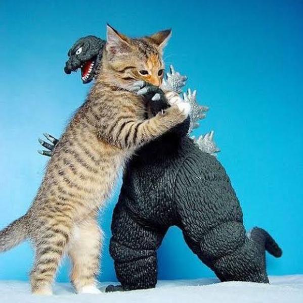 猫対ゴジラ