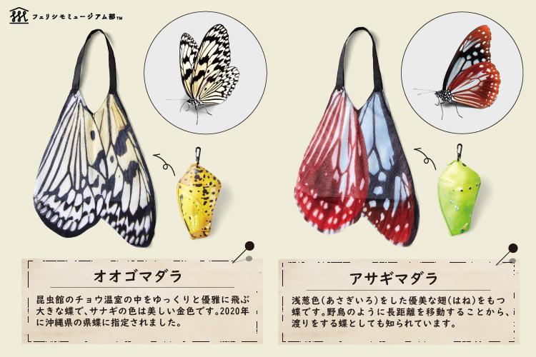 🦋伊丹市昆虫館とコラボ🦋 バタフライエコバッグ&サナギポーチ  卵から幼虫、さなぎから成虫へ…🐛 昆虫の不思議な成長過程「完全変態」のおもしろさをエコバッグに