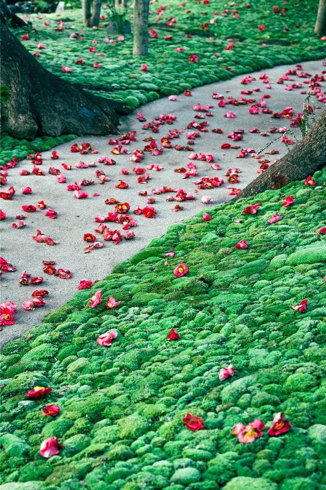 """ホテル椿山荘東京「椿絵巻」""""つばきの絨毯""""&雲海が織り成す絶景インスタレーション、限定スイーツも -"""