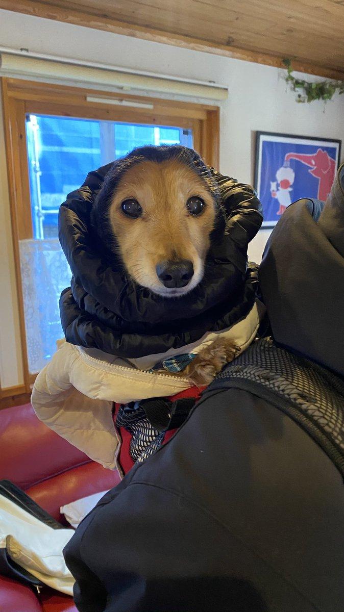 うちのイッヌ、リュックで背負われてバイクに乗るのが大好きなんだけど、親父が施した防寒対策が田舎のお婆ちゃんすぎて可愛い