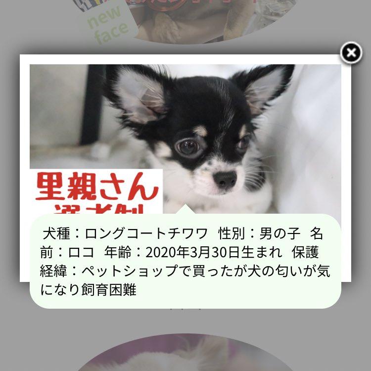 って思ったけど、保護犬のサイト見てみたら可愛い子犬たちがとんでもない理由で保護されてて憤る😢