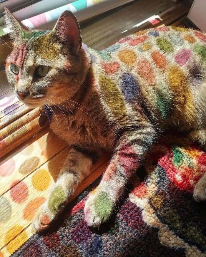 窓にかかっているイースターのデコレーションが日に当たって猫氏に彩りを