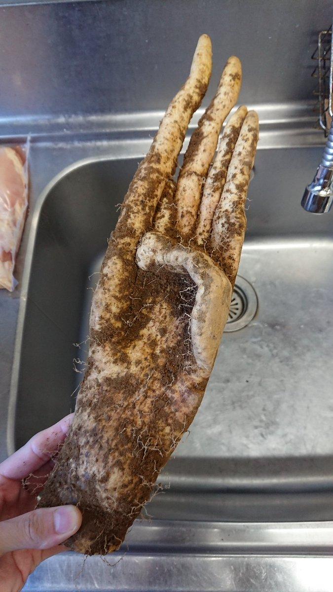 いとこが自然薯くれたんだけどあまりにも怖い形してワロタ