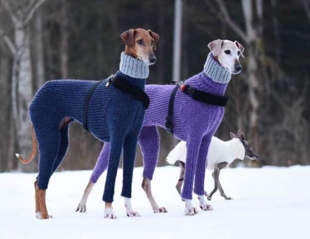こんだけ美しくセーターを着こなすと惚れてしまうな。