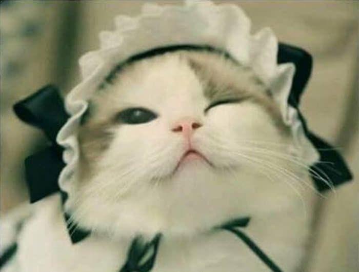 絵に描いたような美猫