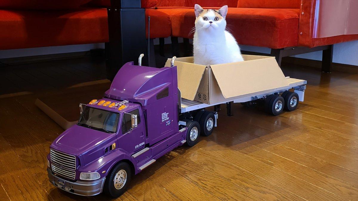 ラジコントレーラーの荷台に乗ってくつろぐ猫の動画です