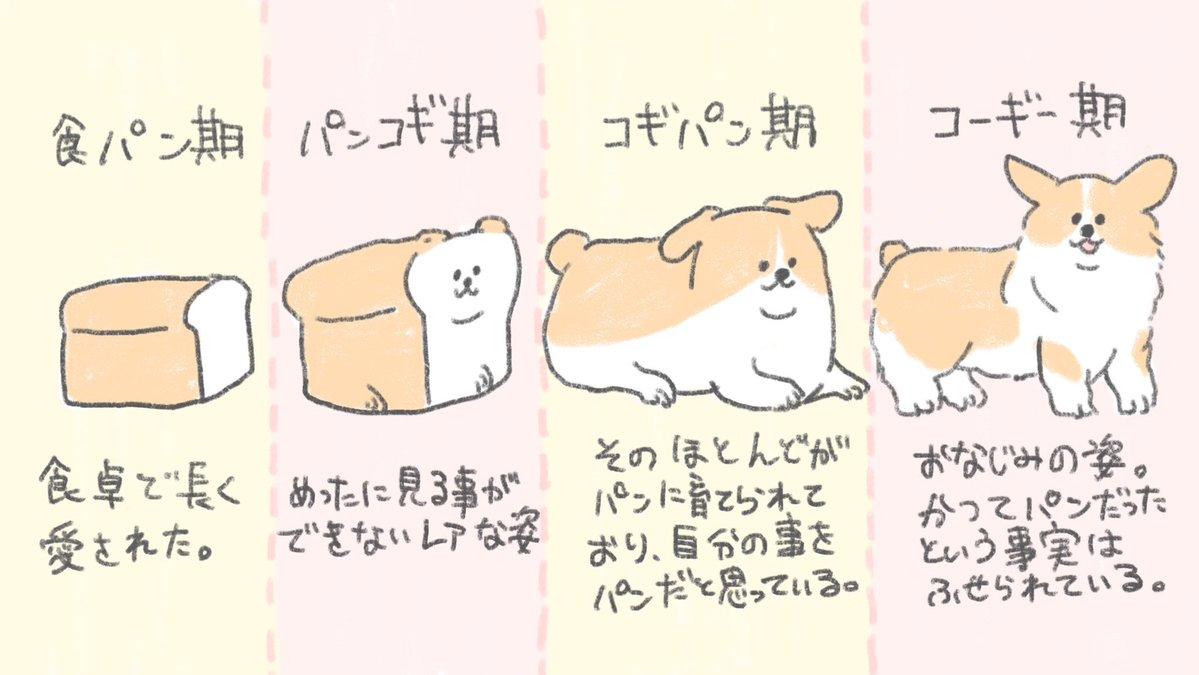 記録には残ってないけど食パンはこういう 進化をたどってコーギーになったんだよ