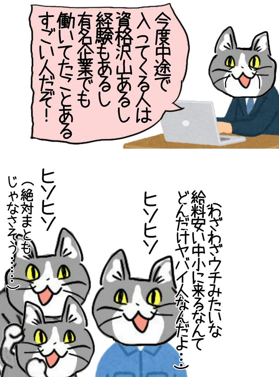 疑心暗鬼の猫たち #現場猫