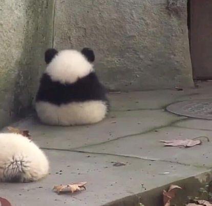 かわいいパンダでも見て心を落ち着かせるか