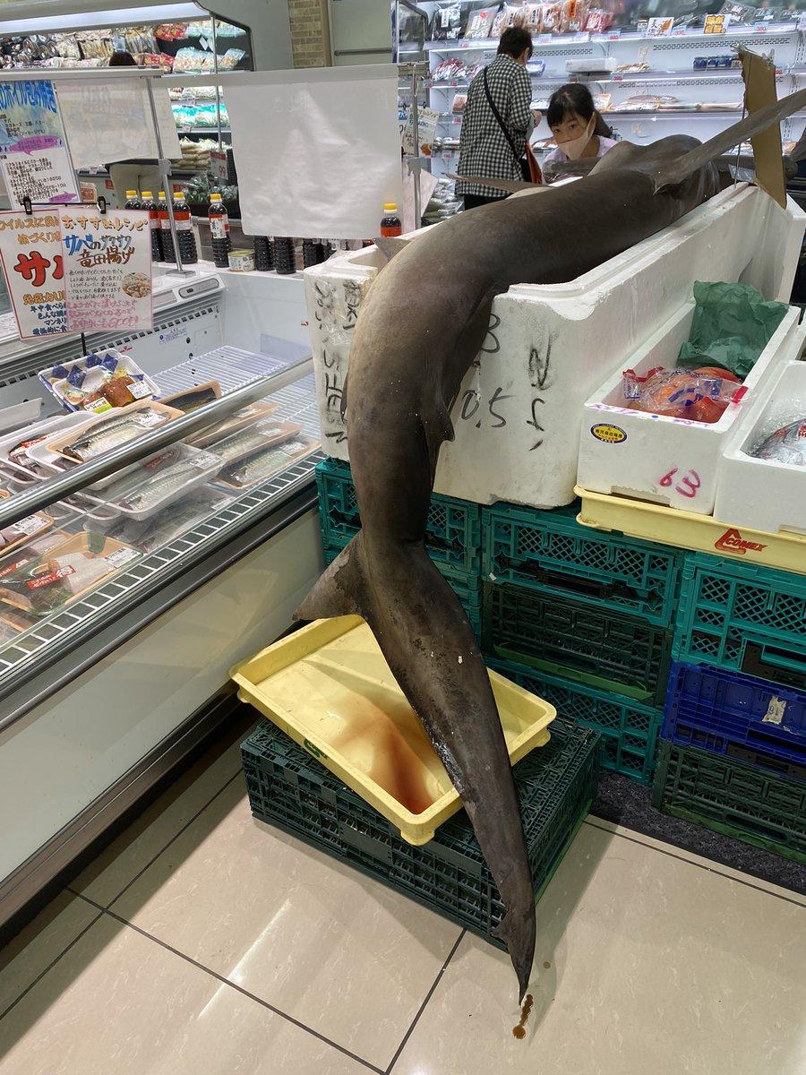 三田のスーパーの魚コーナーにシュモクザメ(ハンマーヘッドシャーク)売ってるんやけど…😳