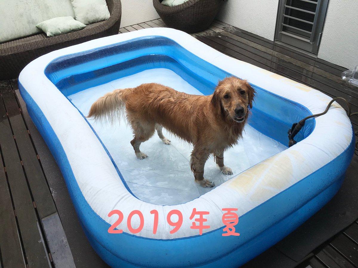 お分かりいただけただろうか……これは後片付けが面倒で毎年ワンサイズずつ小さくしていった結果、タライになったプールである