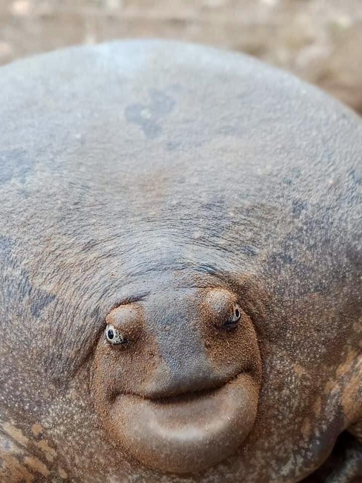 カンボジアで見つかった珍しい生き物。何ちゅう顔しとんや。