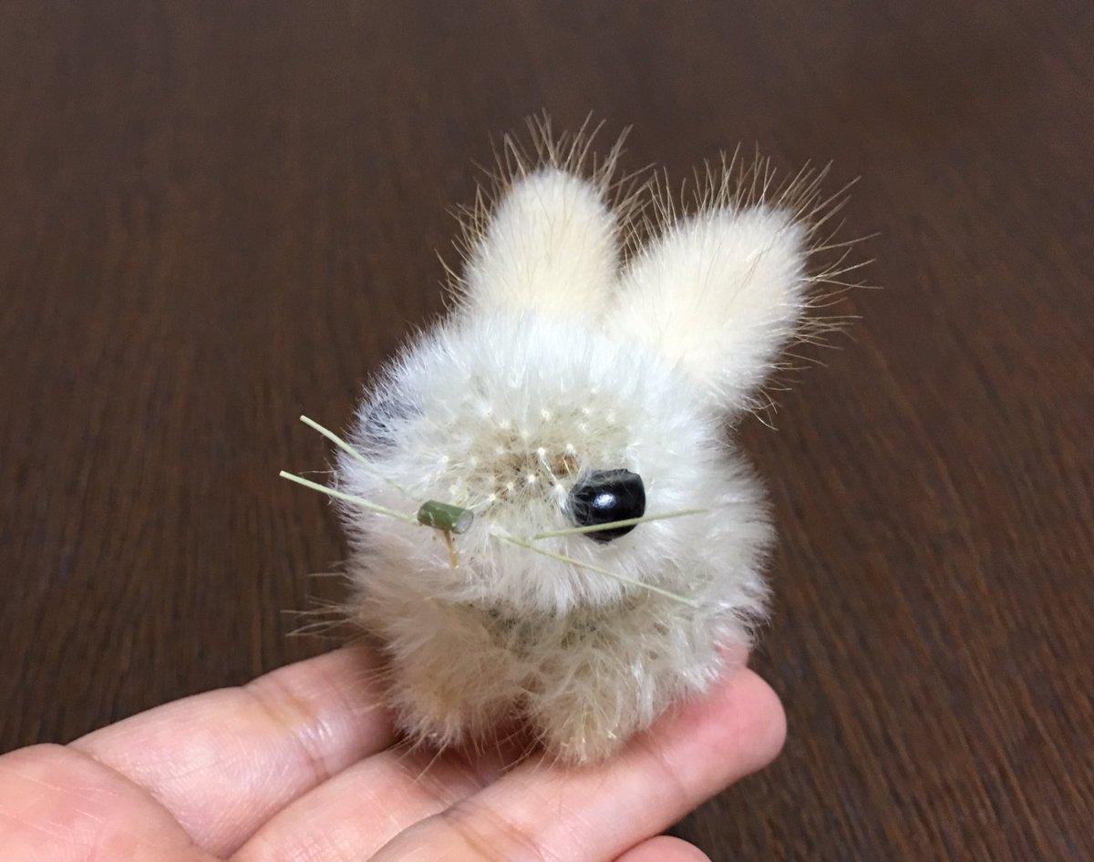 タンポポの綿毛とラグラスでウサギを作りました🐇 『ラグラス』は野うさぎの尻尾の意味だそうです