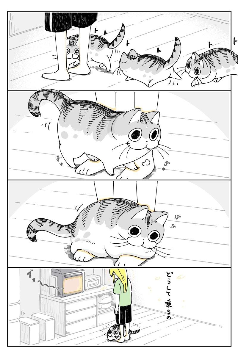 足元でアピールするネコ