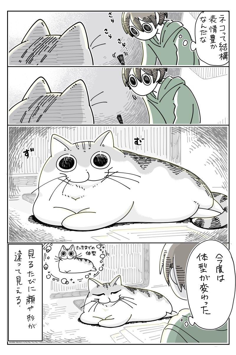 見るたび顔が違うネコ