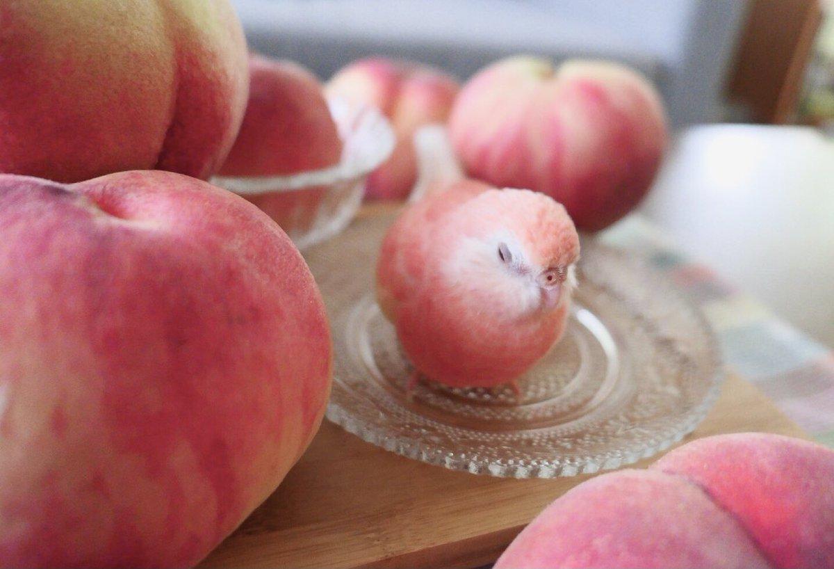 毎年この季節で必ず桃シリーズを撮ります🍑(^ω^)今年の屁桃ちゃんもまん丸