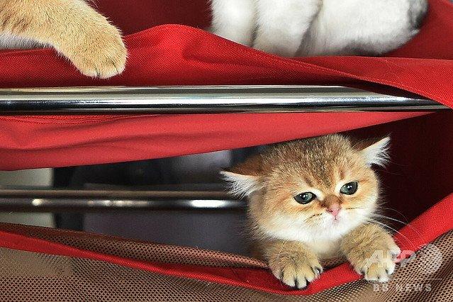 【研究結果】猫は室内で飼った方が良い 論争に決着   屋内飼育のみの猫と比較して、屋外でも飼育されている猫は、病原体や寄生虫に感染する確率が3倍近く高いことが明らかになった