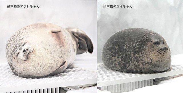 """【海遊館が監修】""""丸すぎるアザラシ""""が60センチの巨大クッションに"""