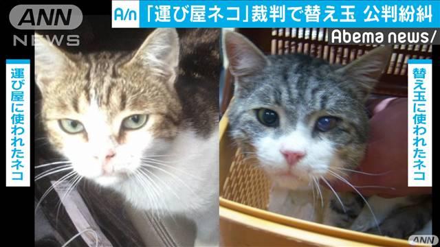 検察側が別の猫を証拠として提出し、公判は紛糾した
