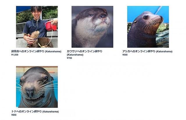 桂浜水族館の「エサやり企画」   エサ代は1,000円と最も高額