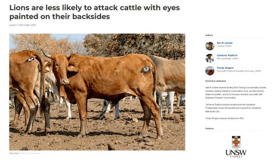 【家畜保護へ】「牛のおしりに『目』を描くとライオンに食べられなくなる」実験結果が発表   「目のマーク」「十字のマーク」「マークなし」に分け放牧