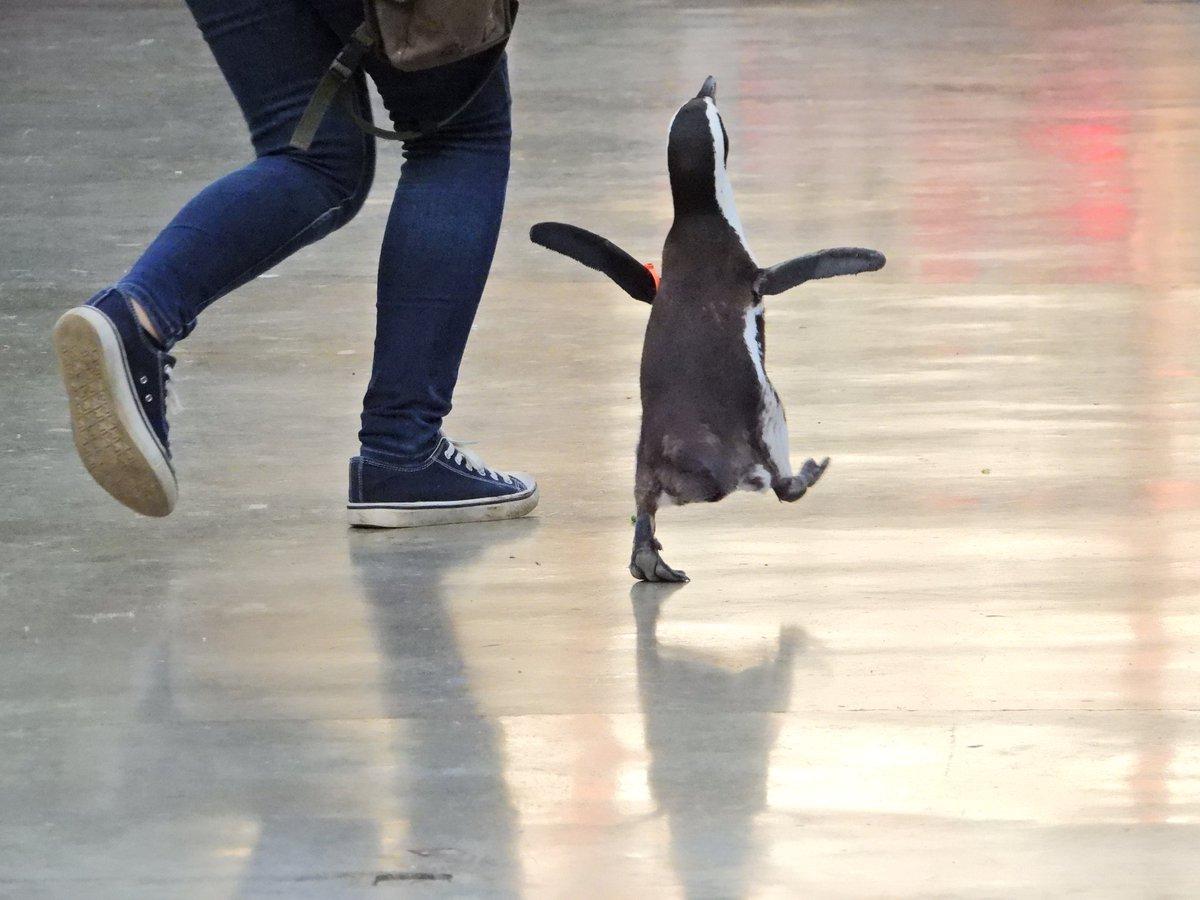 ケープペンギンはね、とっても可愛いのよ