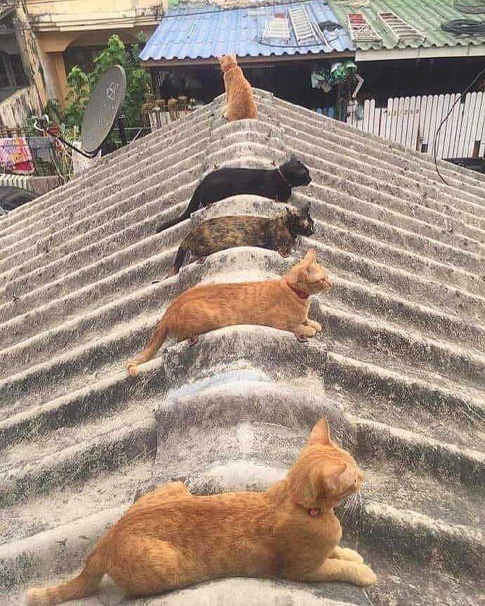 久しぶりの太陽  猫が日光浴していた