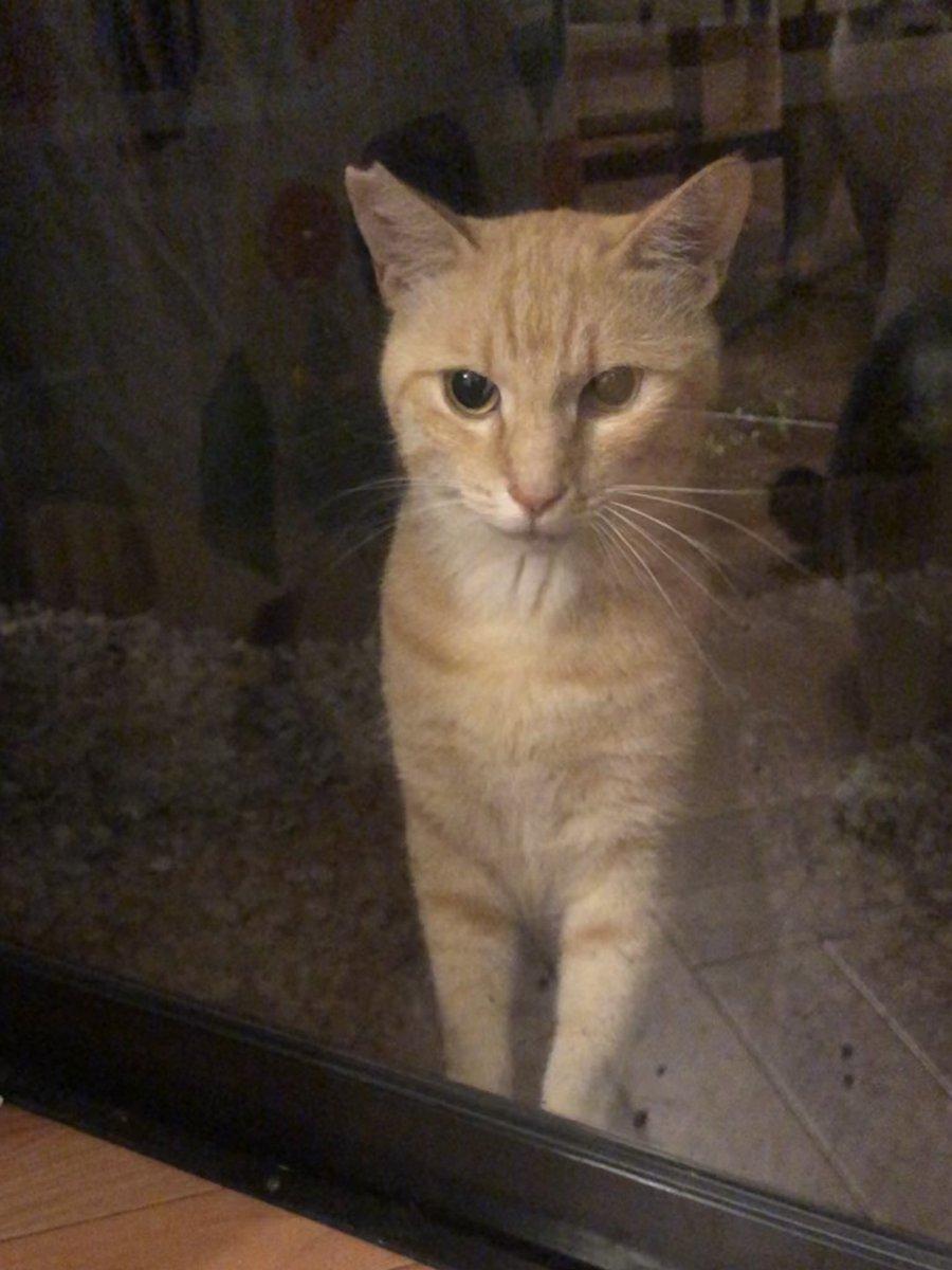 窓バンバンされてるけどこれが猫バンバンというやつなのか。