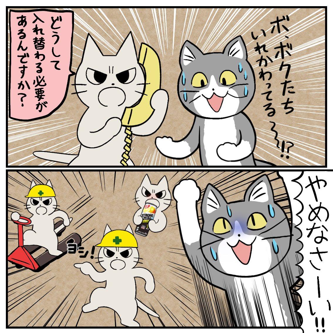入れ替わった猫