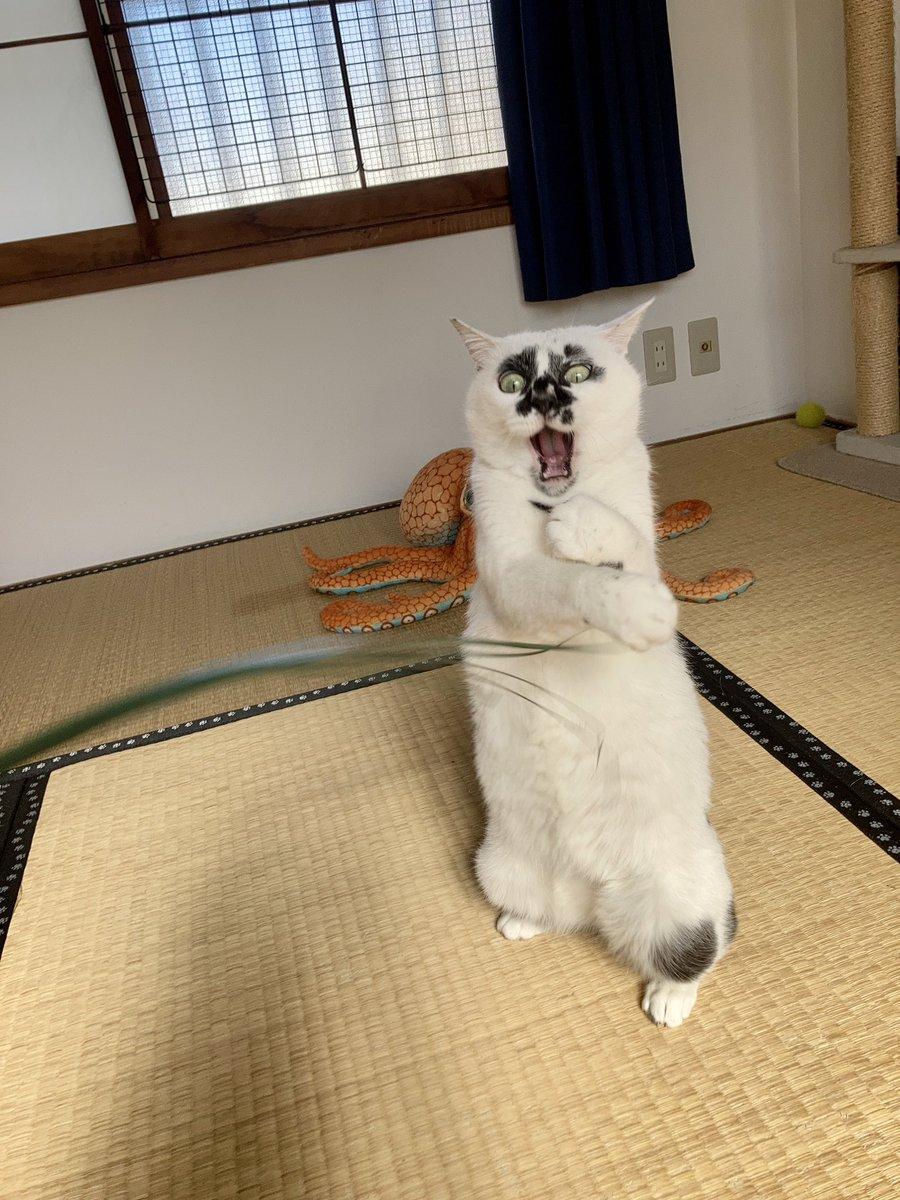#熱海MuddyCat #熱海 #BAR #猫