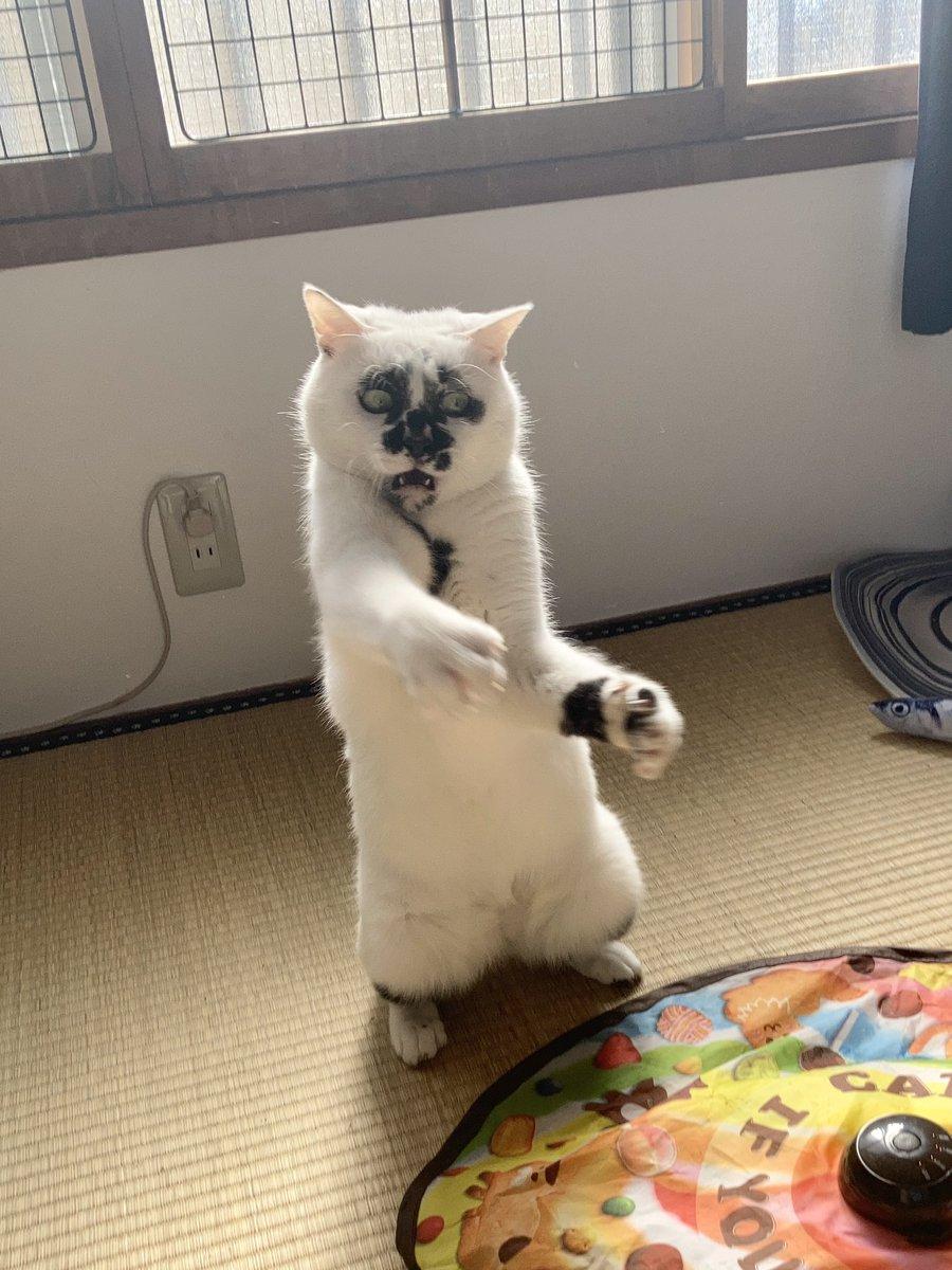 ヒイィィィッ #熱海MuddyCat #熱海 #BAR #猫