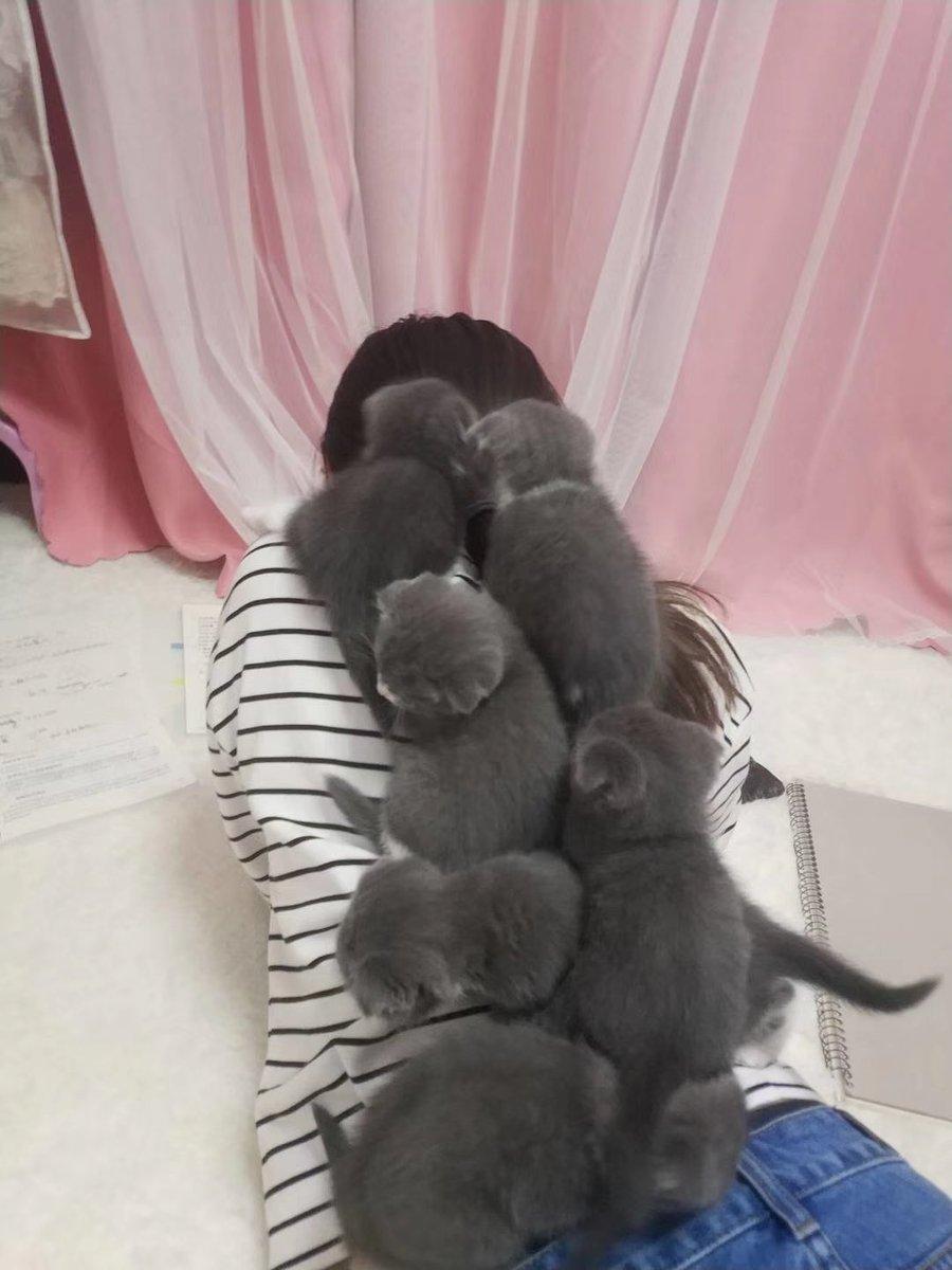 宿題中😭😭 猫が誘惑する!!!