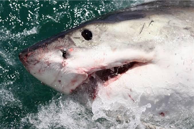 今気づいた ぽぽちゃんはサメと同じ目をしている