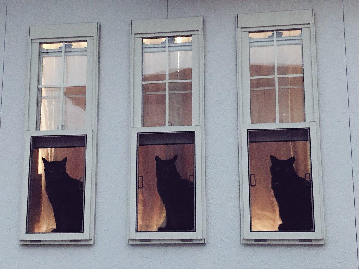 ピアノの先生のとこの🐈⬛×3 3匹並んで座っているのを見たのはこの時が初めてで2回目はまだ訪れていません…  #お前よくぞそんニャ猫撮ってたな選手権