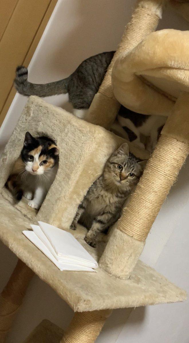 【拡散希望】 名古屋で子猫を保護し、2匹兄弟でジモティに出してしまいました