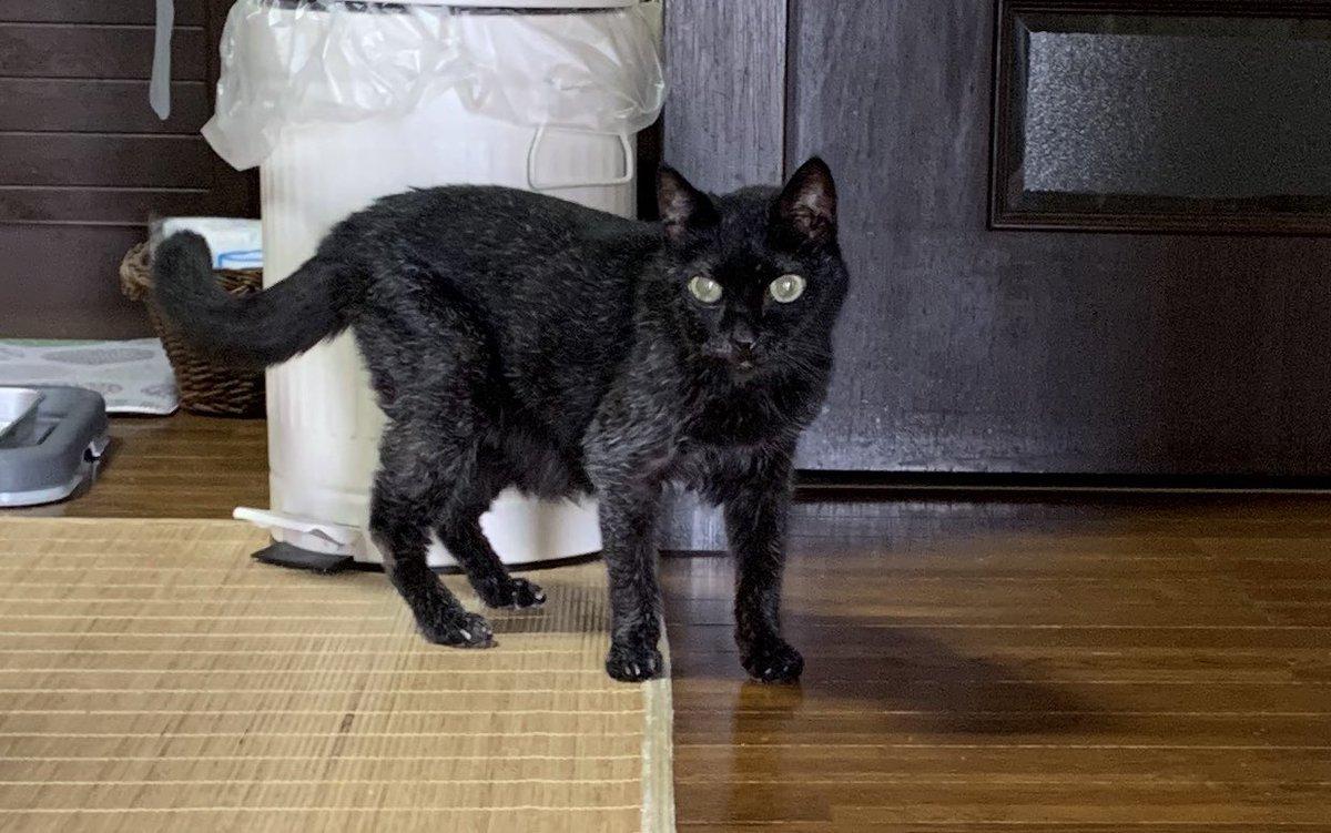 愛猫のクロが無事23歳となりました🎂🙌(8/23)  私はクロに育ててもらって、クロありきの人生でしたので本当に感謝しています🙏  「クロの白髪、沢山の人が褒めてくれたよ」と伝えました☺️ クロおめでとう🎉ありがとう❣️❣️