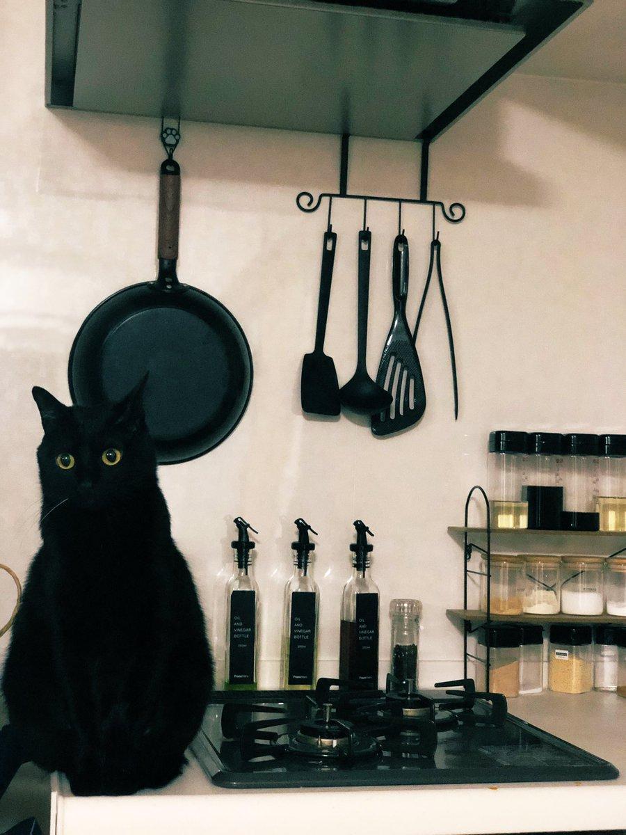 黒猫キッチン