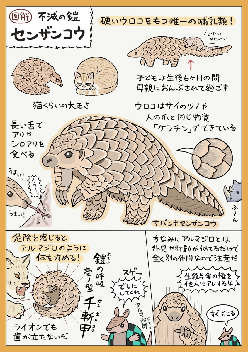 無敵のウロコをもつ動物「センザンコウ」の図解です