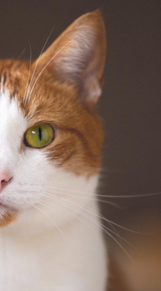 猫の目って緑や黄、青色などいろんな色があるように思いますが、実は子猫の時はみんな青色です
