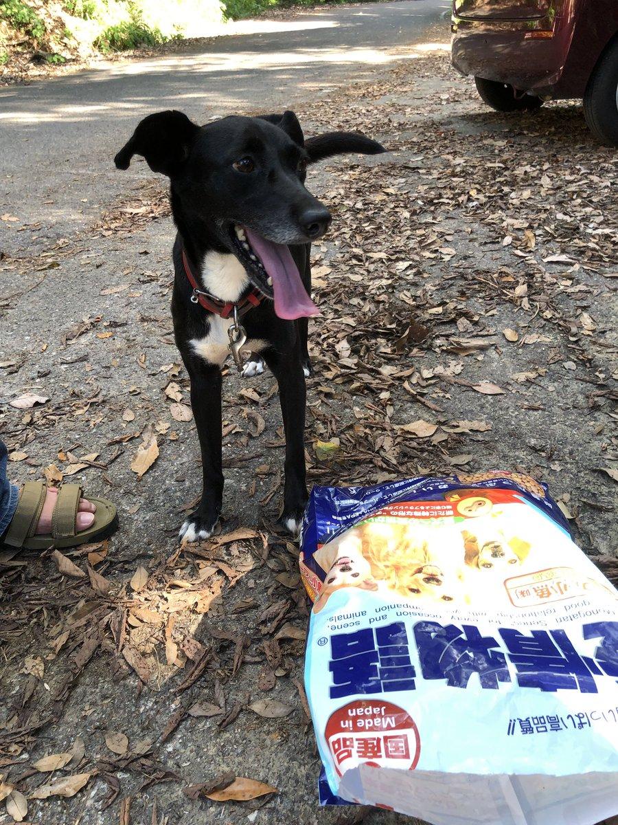 本日8/29、佐賀県多久市の山中に犬が大量のドックフードと共に捨てられていました